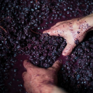 Metal Contamination In Winery Applications